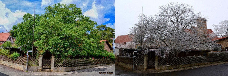 Villa im Sommer und Winter
